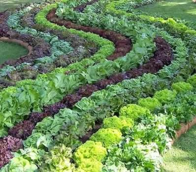 via Edible Landscapes